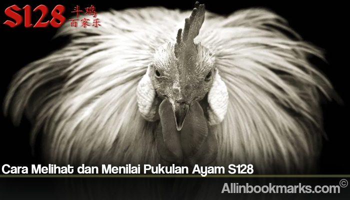 Cara Melihat dan Menilai Pukulan Ayam S128