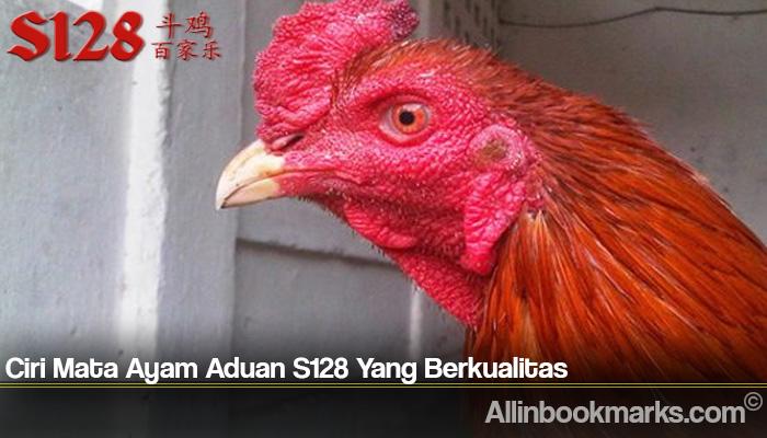 Ciri Mata Ayam Aduan S128 Yang Berkualitas