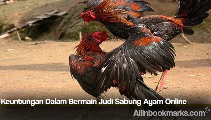 Keuntungan Dalam Bermain Judi Sabung Ayam Online